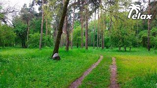 Звуки природы, Лес, пение птиц  - 2 часа Сна или Релакса на Природе