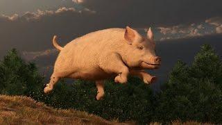 Top 4 vụ động vật cứu người kỳ lạ nhất thế giới