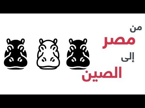 استنفار في -القاهرة الدولي- لنقل حيوانات فرس النهر إلى الصين  - نشر قبل 46 دقيقة