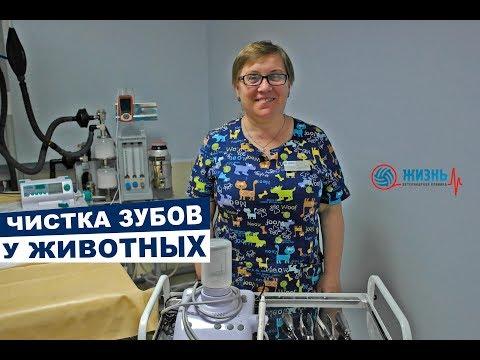 """Ветеринарная стоматология. Ветеринарная клиника """"Жизнь"""" в Калуге"""