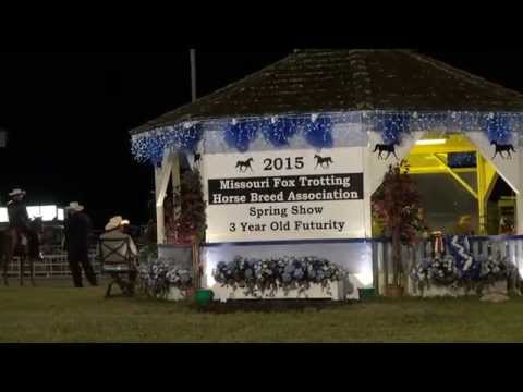 Missouri Fox Trotter -MFTHBA Futurity 3 Years 2015 open Finale