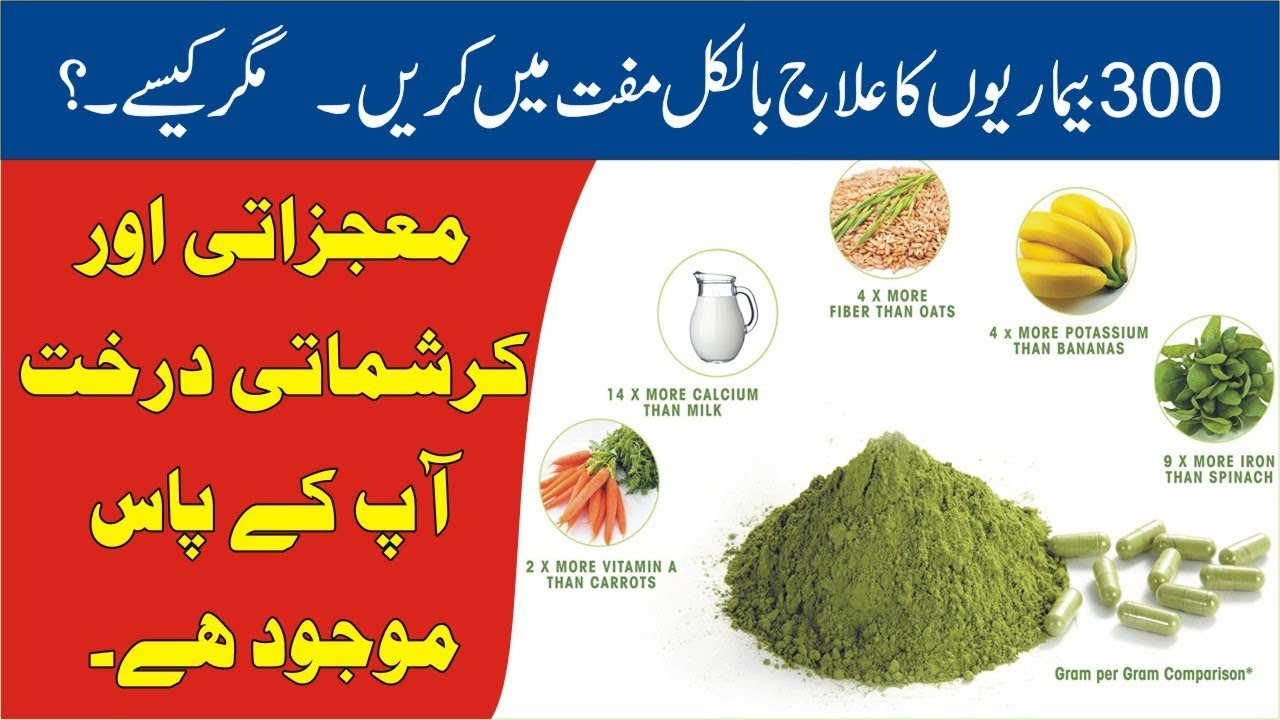Moringa Tree Benefits 🔵 Sohanjna 🔵 سوہانجنہ