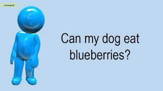 Can My Dog Eat Blueberries?