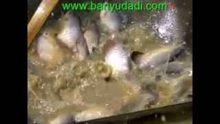 Cara Budidaya Ikan Gurami Lengkap