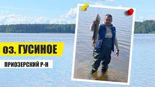 Рыбалка и отдых на озере Гусиное Щука 2кг с плотика FLTB 5 CAPERLAN Приозерский район