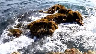 자연의 바다 예전 보리고개때 바닷가 구황음식재료 톳나물…