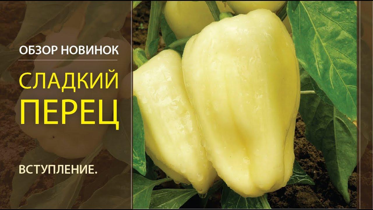 Предложения компаний и поставщиков в рубрике болгарский перец на пульс цен. Оптовые поставки узбекистан. Цена указана за 1 кг продукции.