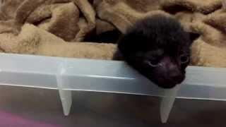生後1週間の子猫を2匹、保護しました -protected the 2 homeless kittens-
