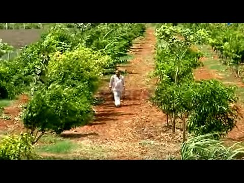 90 fruit varieties in one acre Successful Integrated farming