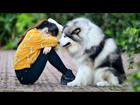 Best Friend – Cute and Funny Animals Videos Compilation