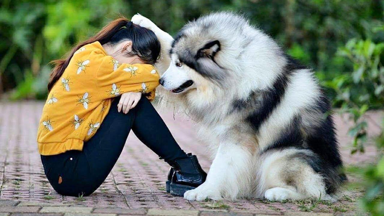 Penelitian: Anjing Memiliki Kasih Sayang