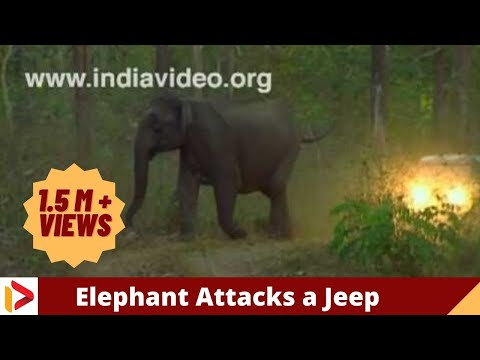Angry elephant charges at camera crew in jungle
