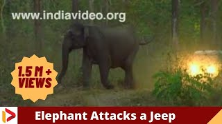 Wild Elephant Attack a Jeep in Jungle - Kerala India