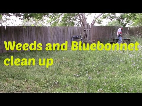 Weeds and Bluebonnet clean up