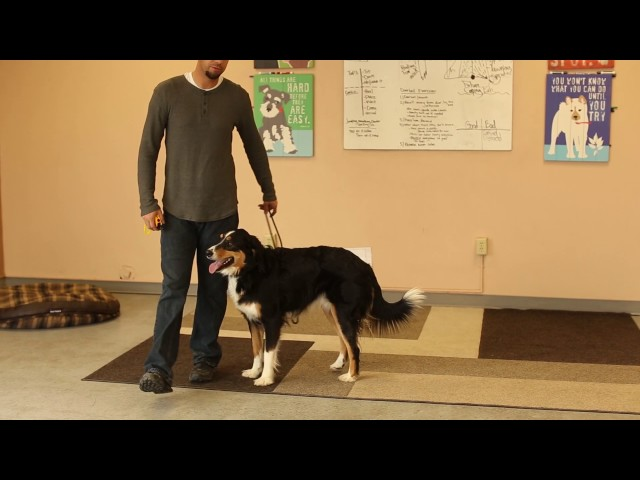 TYD60 Moment- How to Train a Leash Reactive Dog By Training Focus First