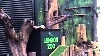 London Zoo 2015