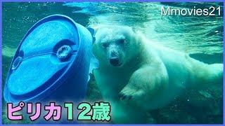 ホッキョクグマ ピリカ12歳の誕生日 朝のプール遊び thumbnail