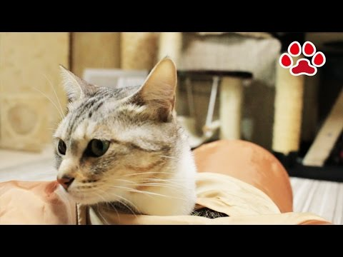 Cats and tonnel【Cats room Miaou】
