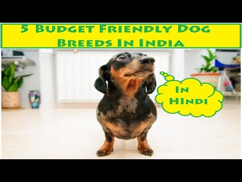 5 budget friendly dog breeds in India | Dog Facts | In Hindi