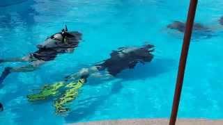 Уроки подводного плаванья в Мирамаре отеля