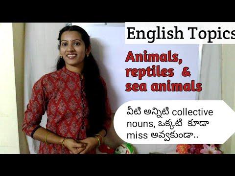 Collective Nouns _part 2(animals).