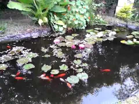 Estanque peces y plantas despu s de la limpieza youtube for Peces y estanques
