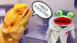 Animal Doctor Fizzy Helps a Bearded Dragon Lizard