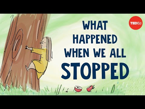 "Video image: ""What happened when we all stopped"" narrated by Jane Goodall"