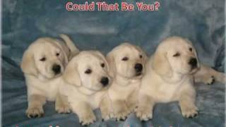 White Lab Puppies Portland Oregon