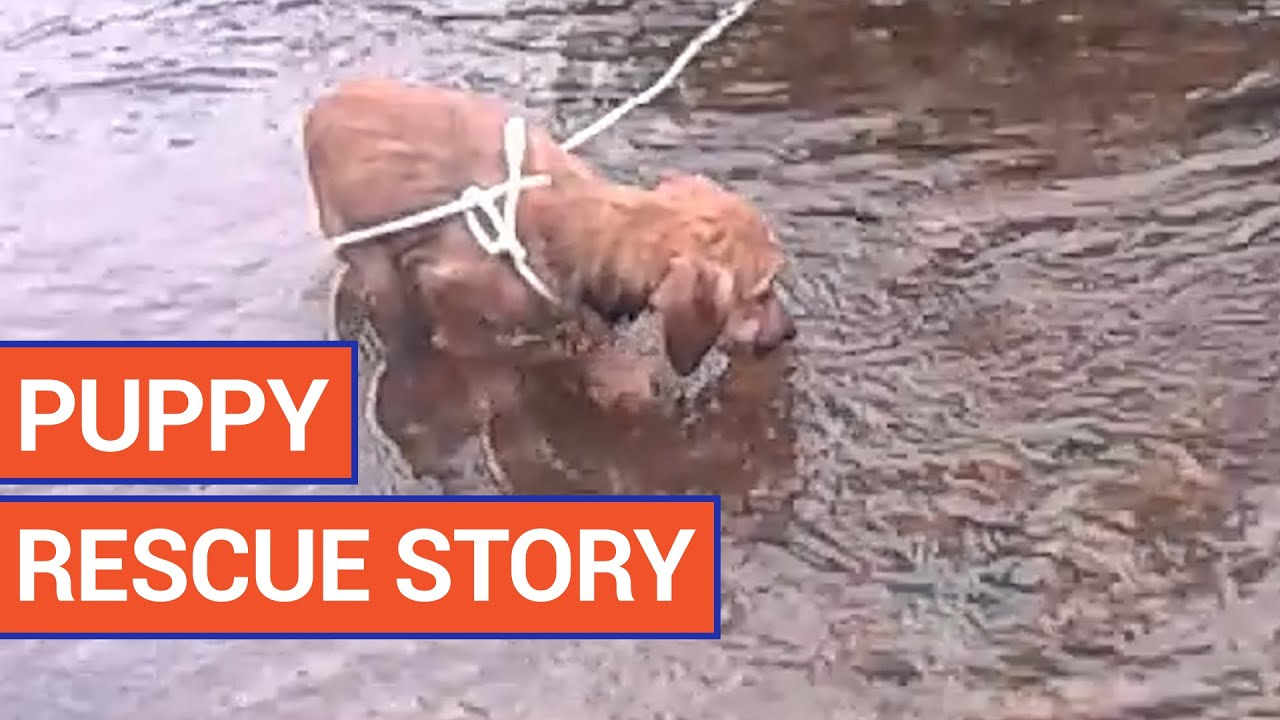 Amazing Puppy River Pet Rescue Video 2016 | Daily Heart Beat