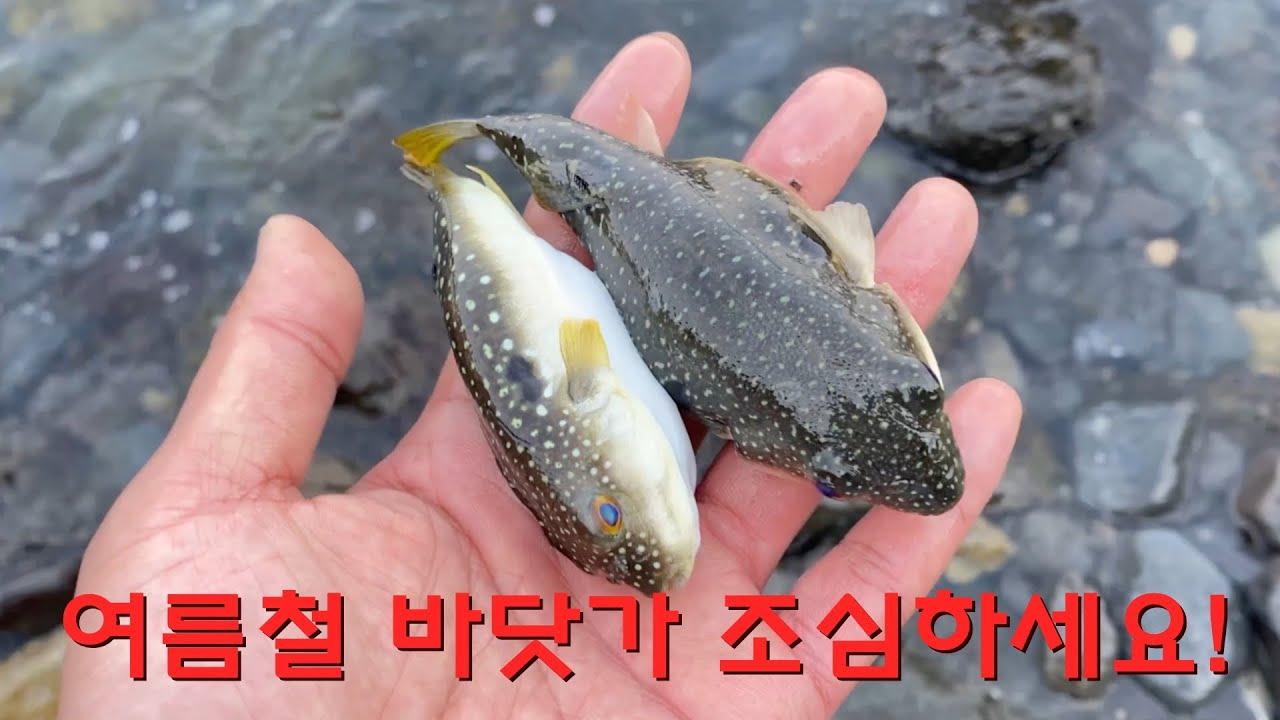 바다에서 발견되는 필로폰 주사기와 먹파리, 기후변화 현상에 육지로 떠밀려온 수많은 복어떼