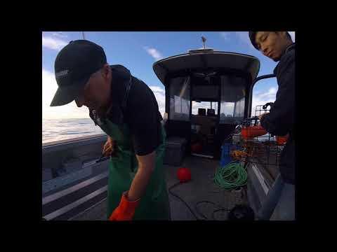 Kaikoura Fishing Tour