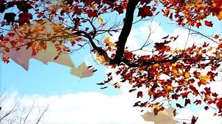 ОДИНОКИЙ КЛЁН... Александр Харадуров. Авторская песня. Клип - Ирина Жукова-Каменских.