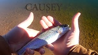 Trout fishing Causey
