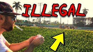 The End of Dog Racing in Florida (Gambling Vlog #40)