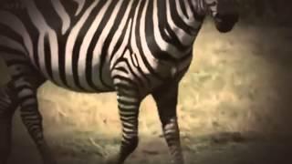 DOKU Wilde Tiere, große Liebe   In der Savanne Kenias