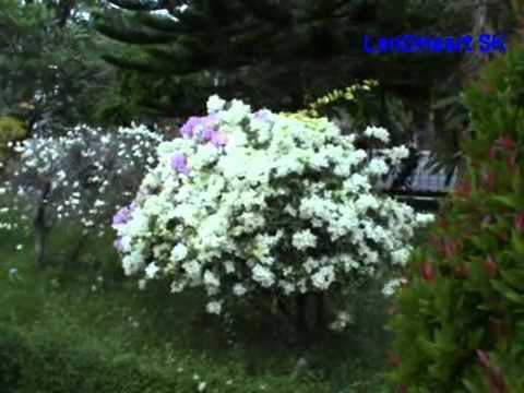 Derita Dan Taqwa - Riza Umami