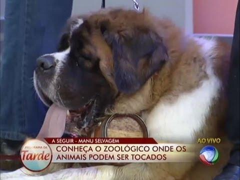 Amigo Pra Toda A Vida: Veja Qual é O Cachorro Ideal Para O Seu Estilo De Vida