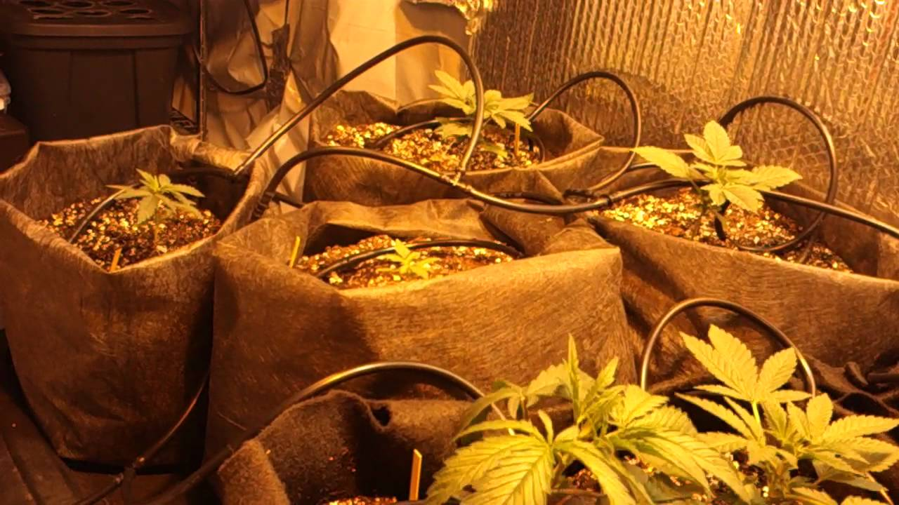 Hydroponic Grow What Box