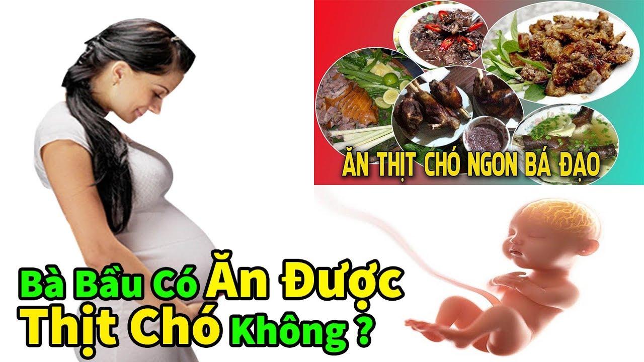 ✅ Bà Bầu Mang Thai Có Ăn Được Thịt Chó Không ?   Ăn Thịt Chó Có Ảnh Hưởng Đến Thai Nhi Hay Không ?