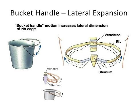 RESPIRATORY PHYSIOLOGY: BUCKET HANDLE MOVEMENT AND PUMP HANDLE MOVEMENT