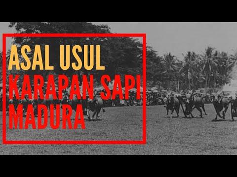 SEJARAH ASAL USUL KARAPAN SAPI MADURA JAWA TIMUR