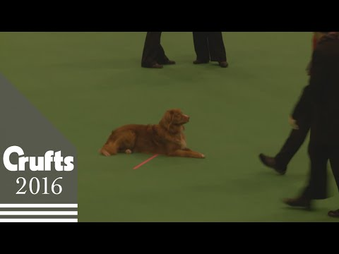 Obreedience Competition - Part 4 | Crufts 2016