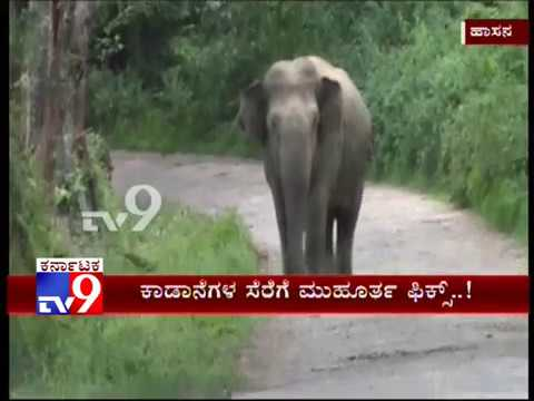 Dist Administration Prepares Master Plan to Trap Rogue Elephants Across Hassan