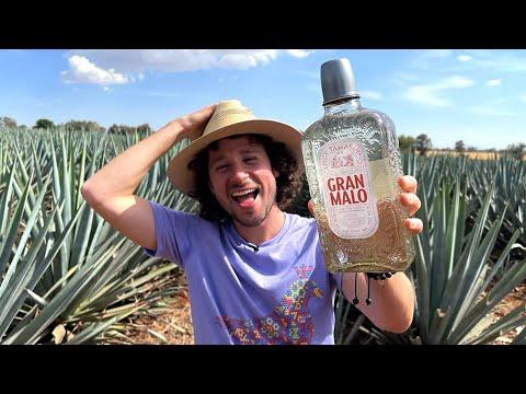 Mi nuevo proyecto: Tequila sabor a tamarindo | ¿Cómo se hace y por qué es TAN DELICIOSO? 🤤🥃