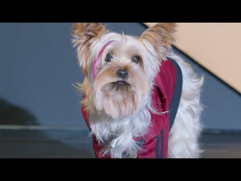Pup Star: Better 2Gether Music Video - Better Together