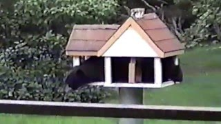 ☺ AFV Part 347 - Best Backyard Animals (Funny Clips Fail Montage Compilation)