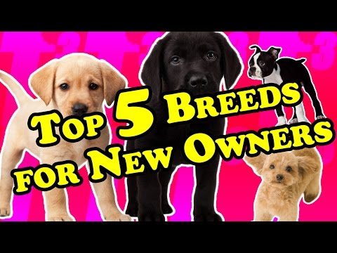 TOP 5 Best Breeds for First-Time Dog Owners | Best Breeds for New Owners