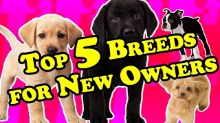 TOP 5 Best Breeds for First-Time Dog Owners   Best Breeds for New Owners