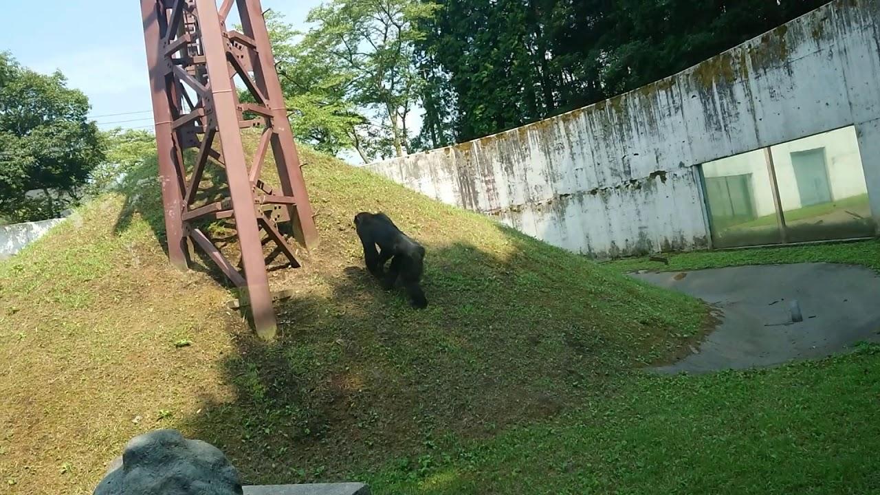 チンパンジー ポコちゃん 死んだ
